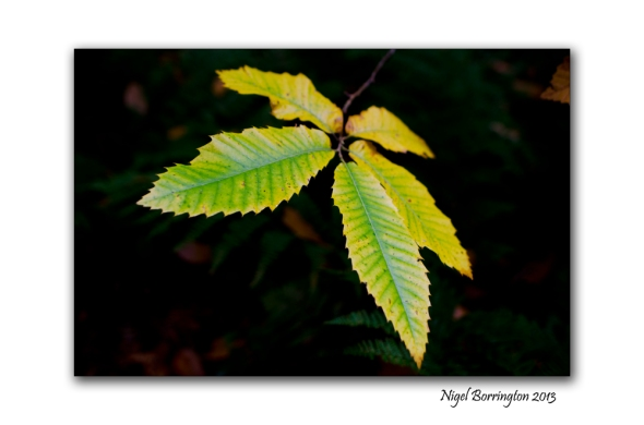 In A September woodland 8