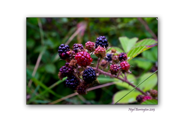 In the hedgerow 3