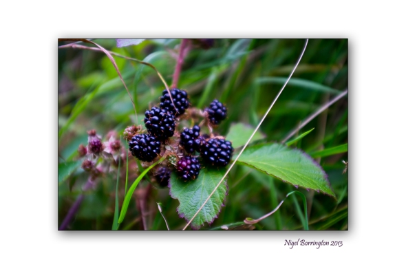 In the hedgerow 4