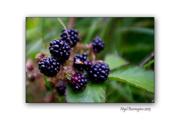 In the hedgerow 6