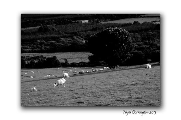 Kilkenny photography 5