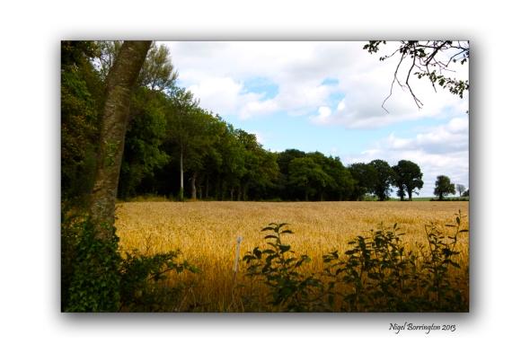 Kilkenny through the tress 10