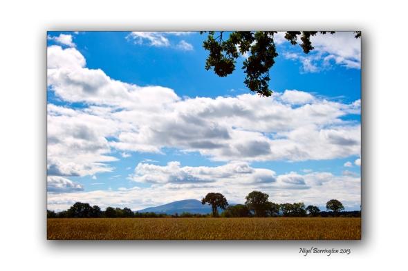Kilkenny through the tress 12