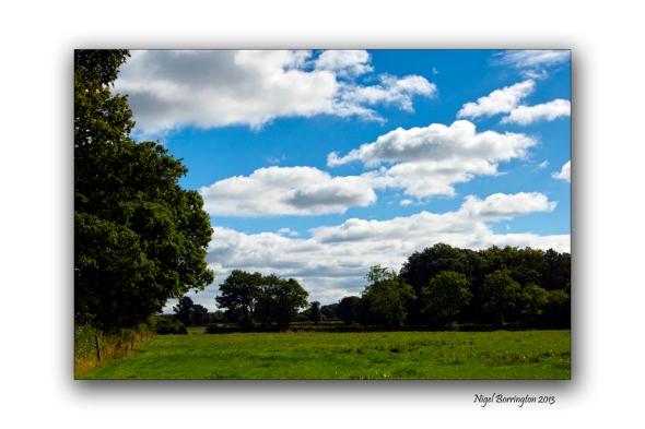 Kilkenny through the tress 14