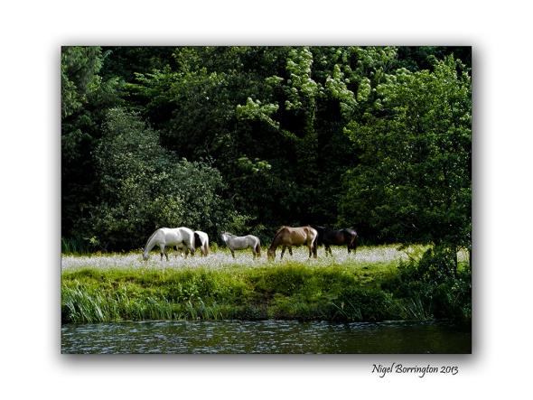 Sundays on the river bank 9