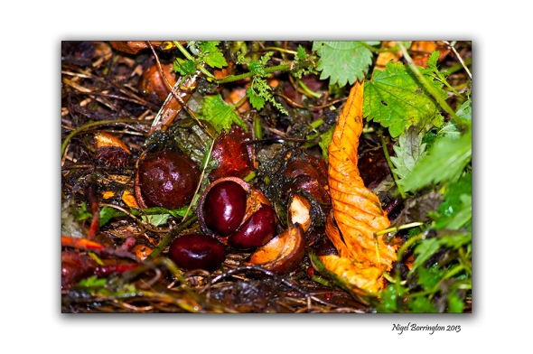 The first chestnuts of autumn 1