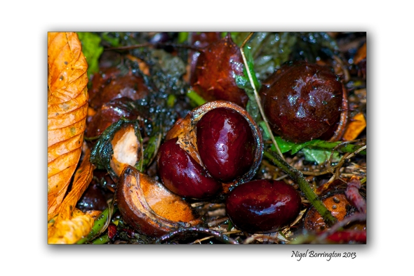 The first chestnuts of autumn 2