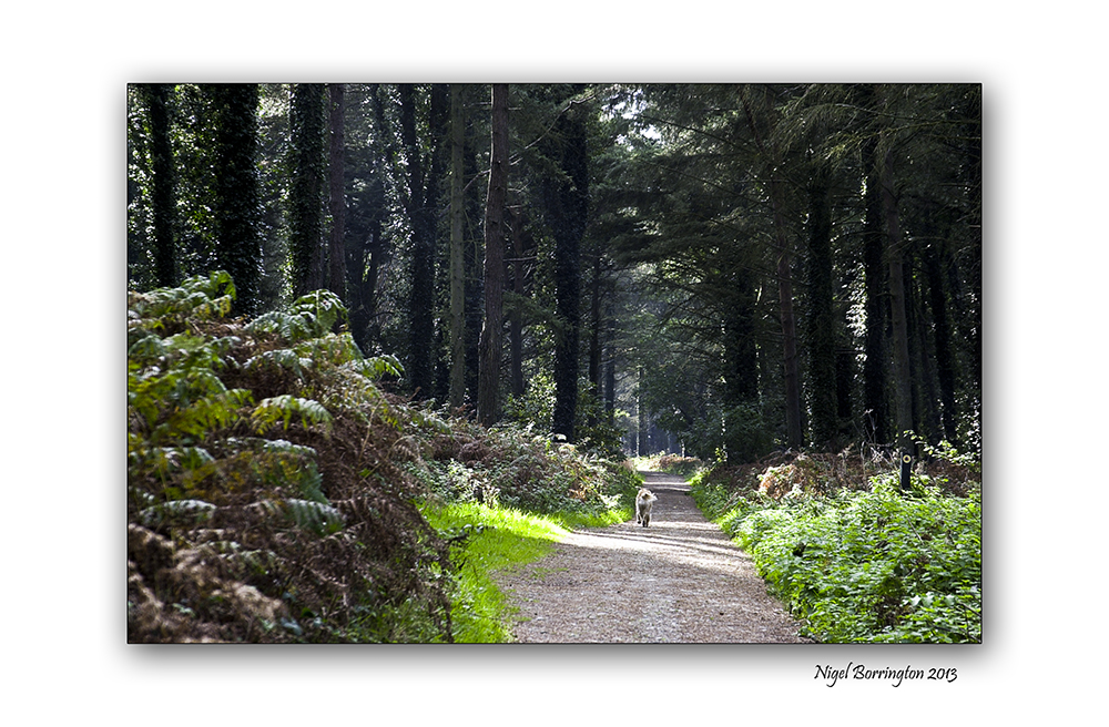 Wexford landscape photography the raven 5