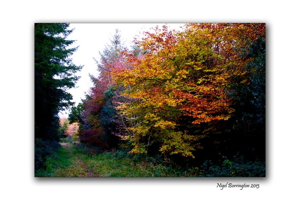 Fires of autumn time 2