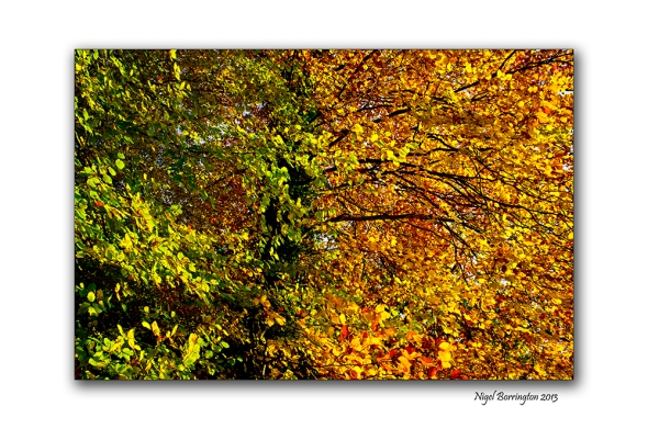 Fires of autumn time 3