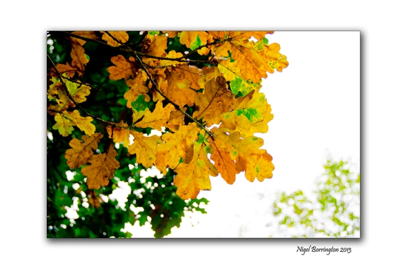 Fires of autumn time 4