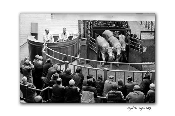 Kilkenny Cattle mart 003