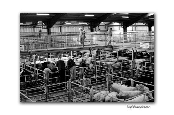 Kilkenny Cattle mart 004