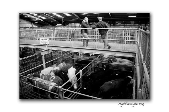 Kilkenny Cattle mart 005
