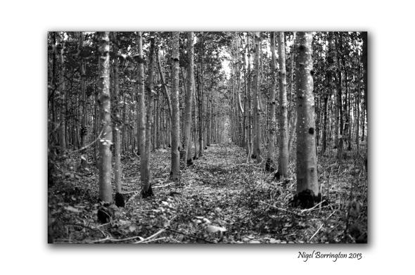 KIlkenny landscape photography 06