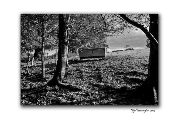 KIlkenny landscape photography woodstock 1