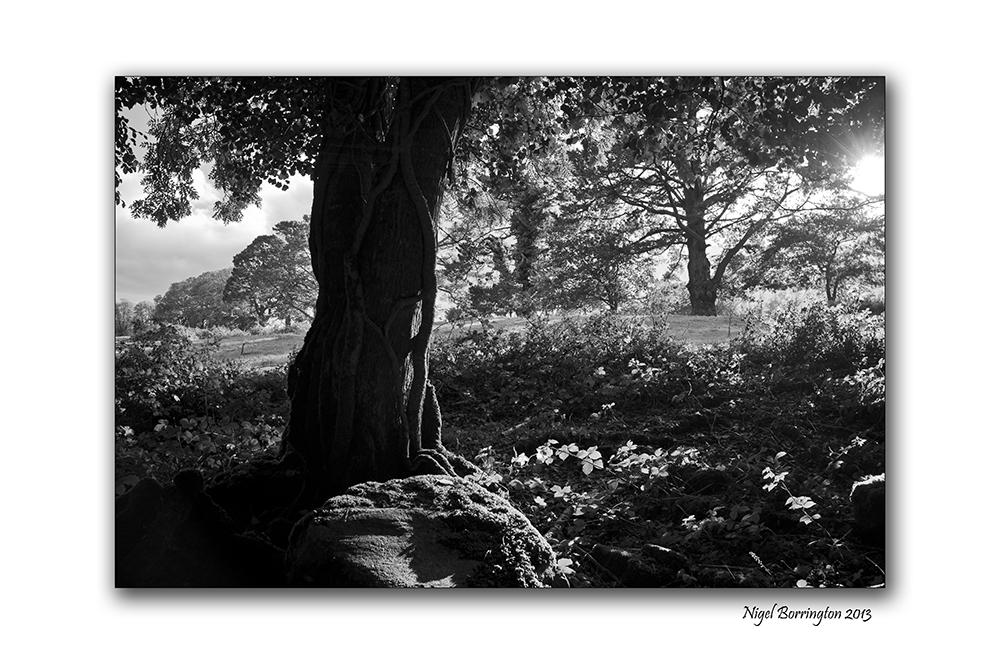 KIlkenny landscape photography woodstock 2
