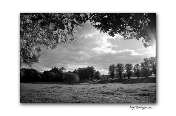 KIlkenny landscape photography woodstock 3
