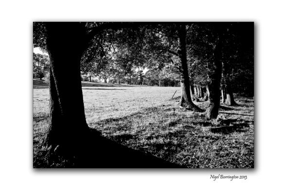 KIlkenny landscape photography woodstock 5