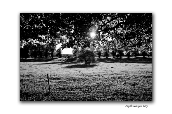 KIlkenny landscape photography woodstock 6
