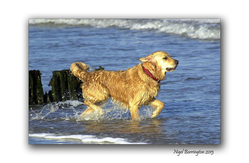 Rosslare on the beach 7