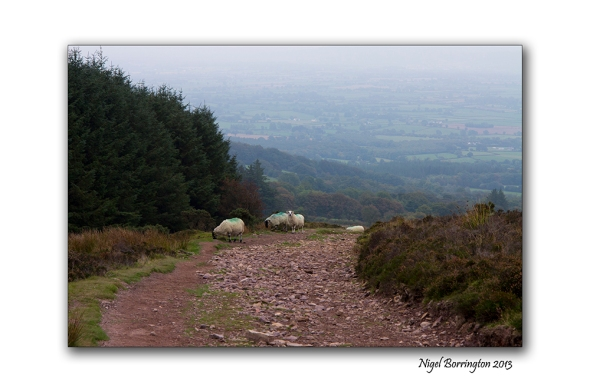 Walking up slievenamon 6