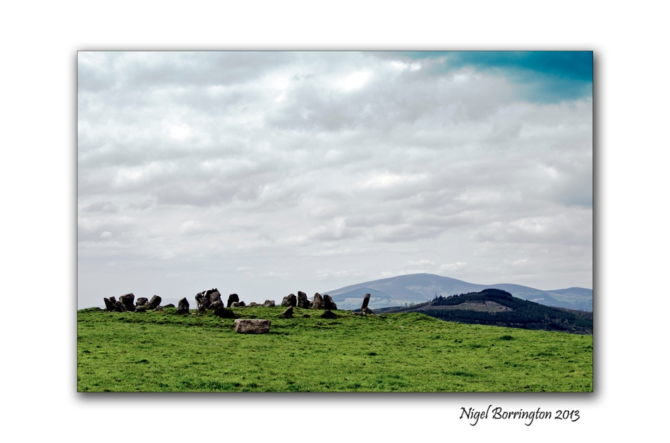 cattle at Tullaghought 4