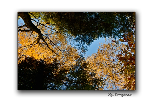 Golden Trees of Autumn 2