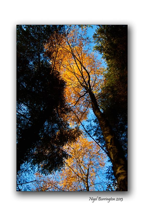 Golden Trees of Autumn 4