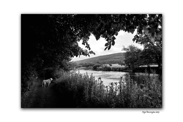 Images from the banks of the river suir 1