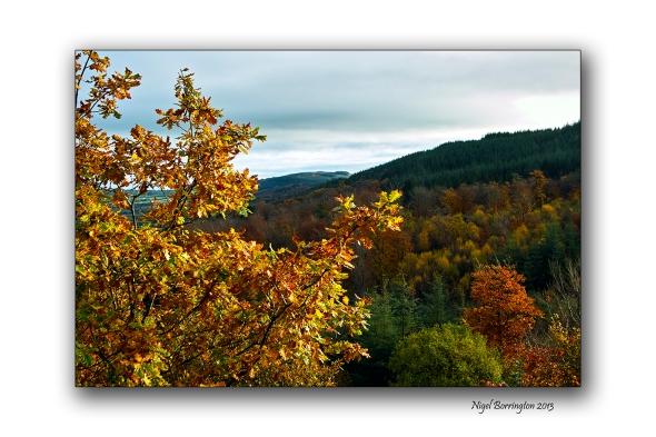 KIlkenny Autumn colours 1