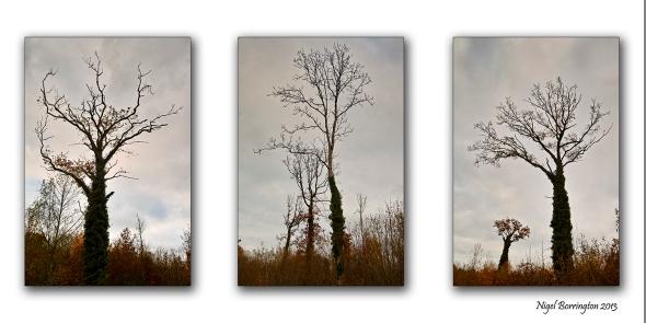 Winter woodlands 1