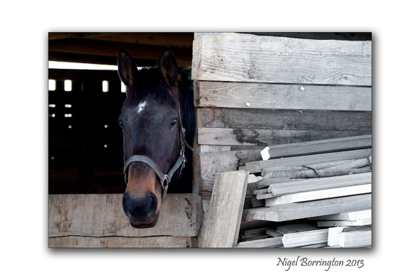 A Horse 1