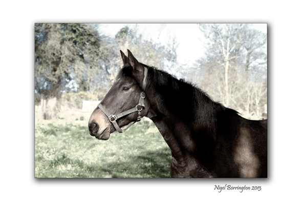 A Horse 2
