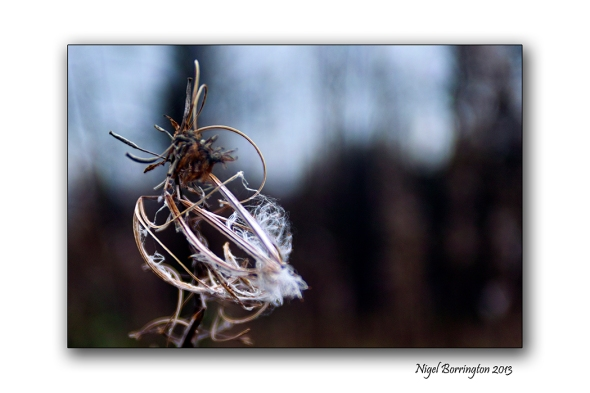 Found things in the Irish woodlands 10