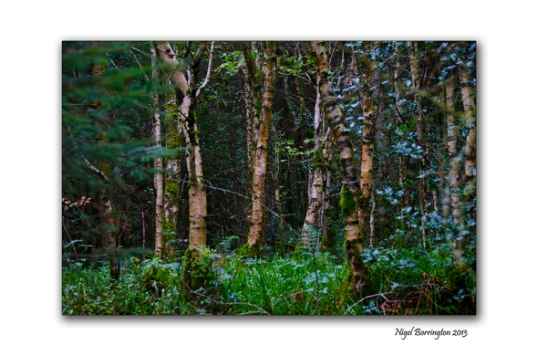 Found things in the Irish woodlands 2