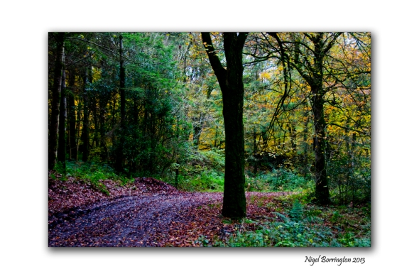Found things in the Irish woodlands 4