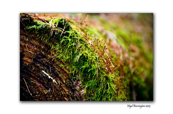 Found things in the Irish woodlands 8