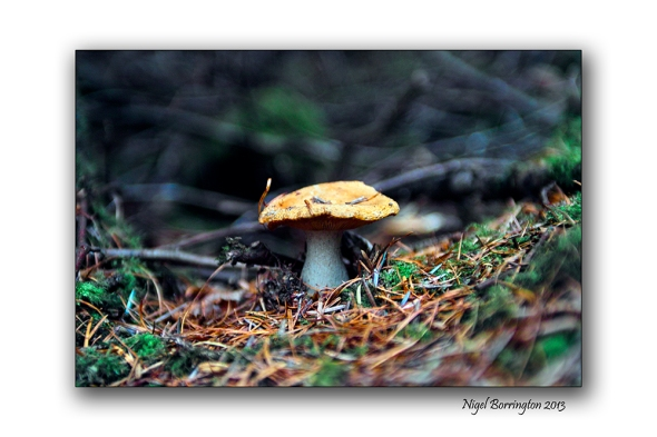 Found things in the Irish woodlands 9