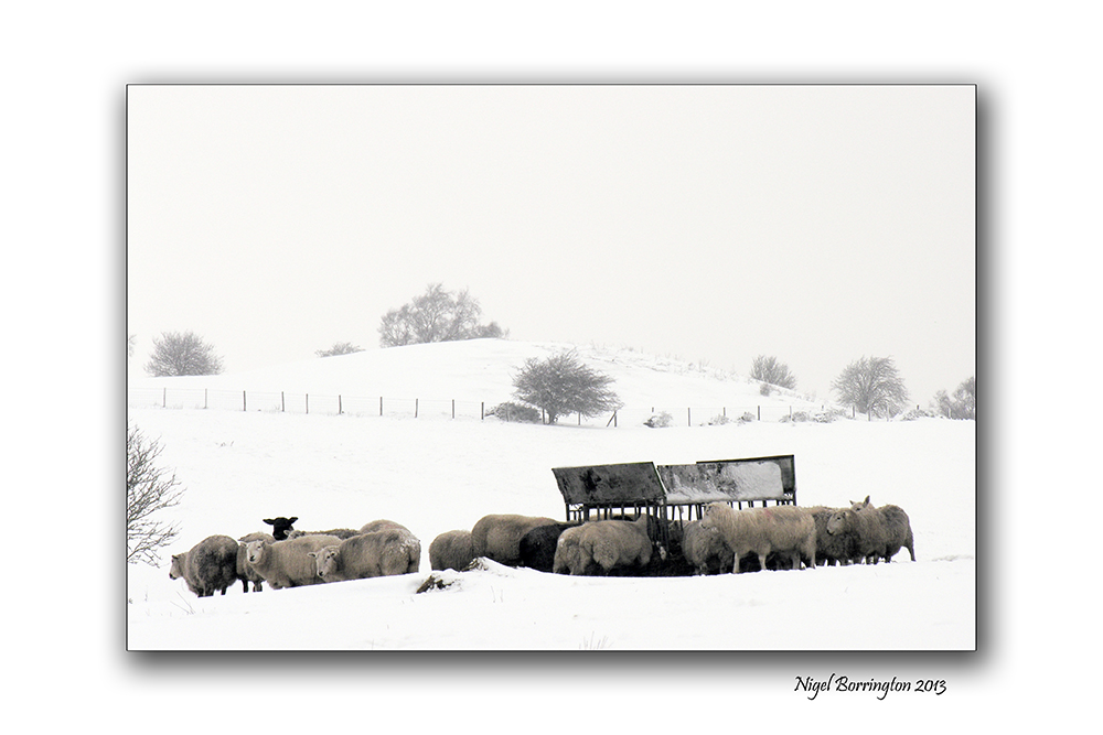 Memories of a winters day 5