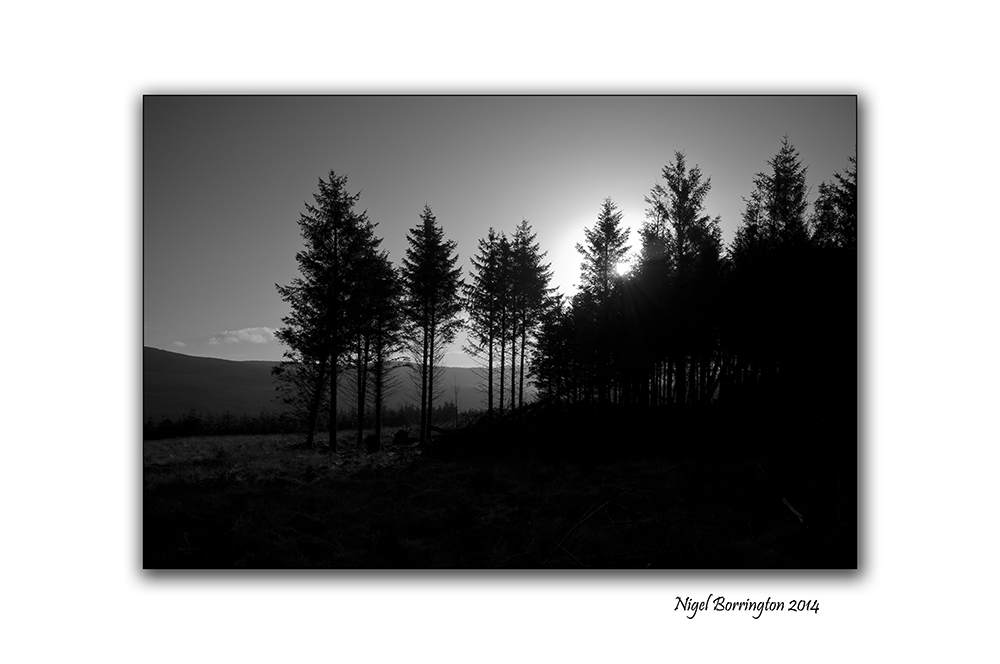 Irish Forestry Gallery 4