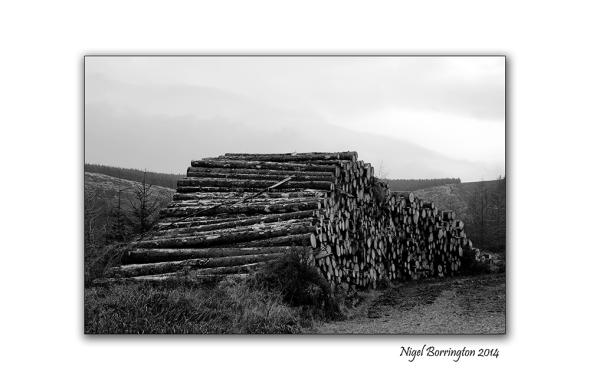 Irish Forestry Gallery 6