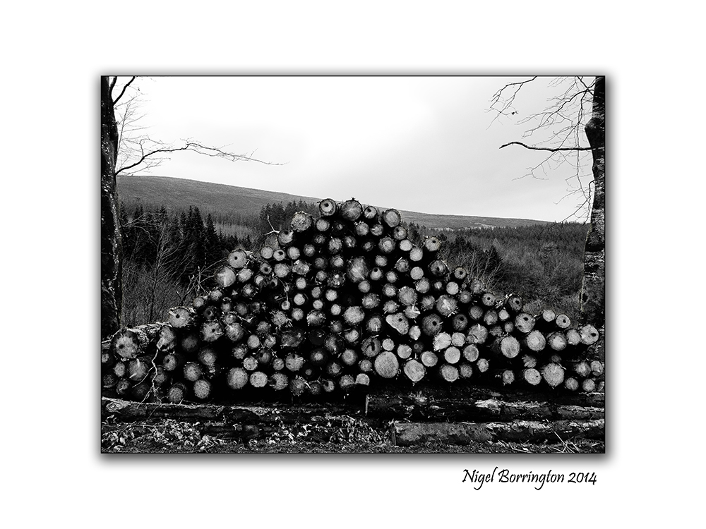 Irish Forestry Gallery 7