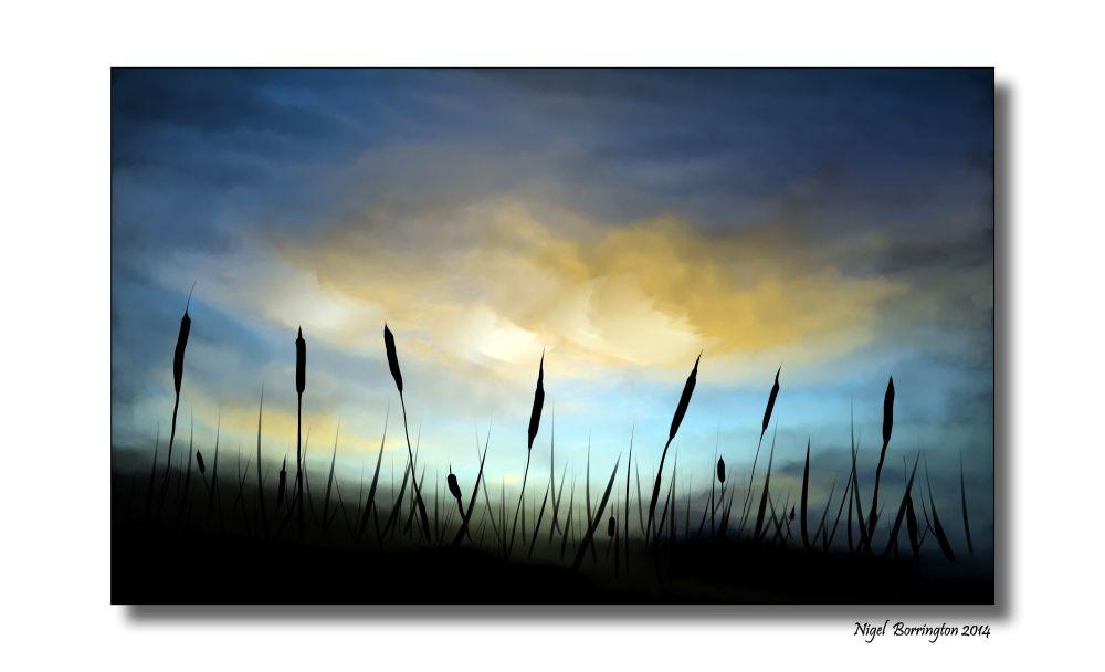 KIlkenny Reed beds