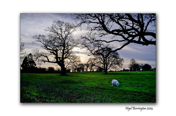 Kells, county Kilkenny Landscape Photography : Nigel Borrington
