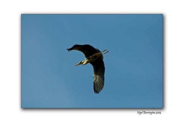 The Herons flight galway bay 1