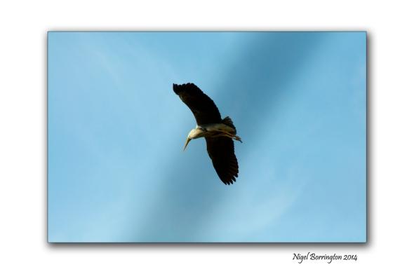 The Herons flight galway bay 2