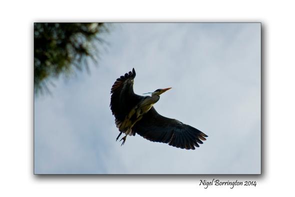 The Herons flight galway bay 3