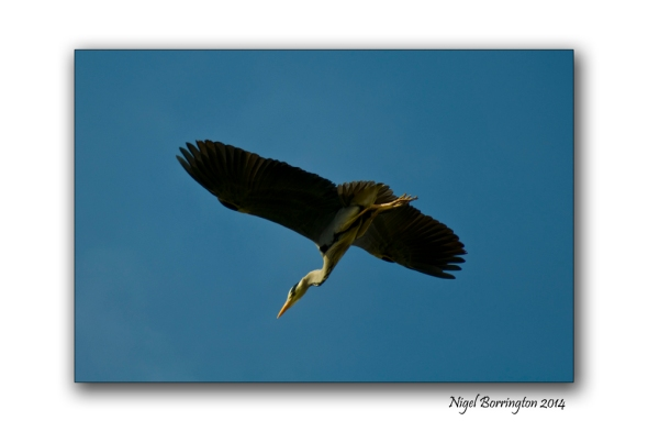 The Herons flight galway bay 5