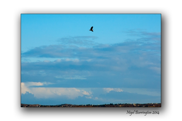The Herons flight galway bay 6